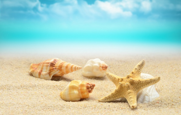 Picture sand, sea, wave, beach, shore, shell, summer, beach, sea, blue, sand, starfish, seashells