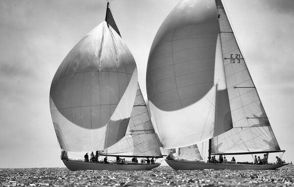 Picture sea, photo, sails, black and white, regatta, ahtay