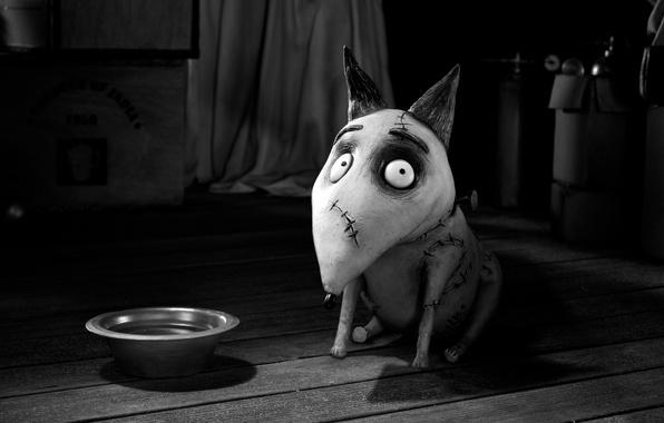 Picture cartoon, dog, bowl, Frankenweenie, FRANKENWEENIE