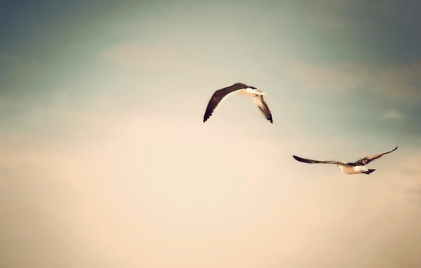 Picture the sky, flight, birds, nature, photo, background, Wallpaper