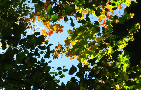 Picture the sky, leaves, branches