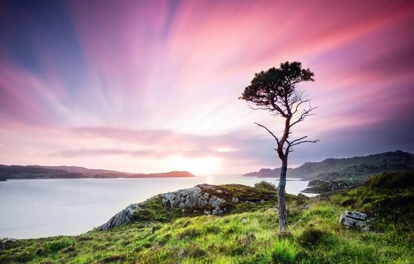 Picture greens, summer, grass, water, trees, landscape, sunset, nature, stones, tree, valley, Scotland, UK, twilight, Scotland, ...