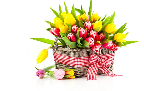 Picture photo, Flowers, Tulips, Basket, A lot, Bow