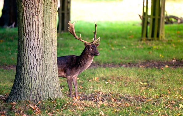 Picture tree, deer, horns, Deer