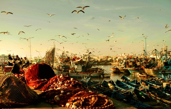 Picture birds, network, seagulls, boats, morning, port, fishermen, Morocco, Rybachie, Essaouira