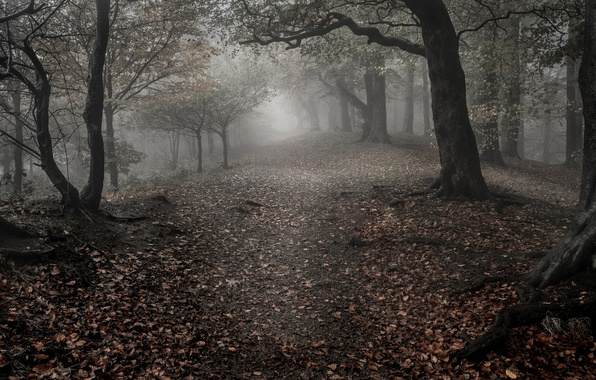 Picture sadness, autumn, forest, leaves, trees, fog