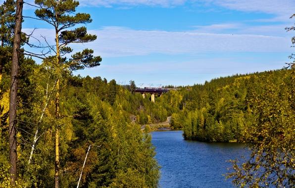 Picture road, forest, bridge, river, train, railroad, Russia, Irkutsk