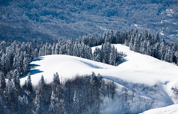 Picture winter, forest, snow, landscape, nature, Wallpaper, mountain, edge, wallpaper, Russia, Sochi, Krasnaya Polyana, Dmitry chistoprudov, …