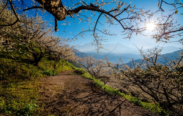 Picture the sky, trees, mountains, spring, path