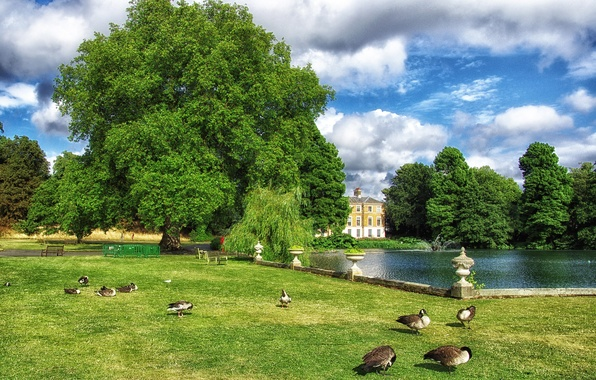 Picture greens, the sky, grass, clouds, trees, birds, pond, Park, lawn, England, London, duck, benches, Kew …