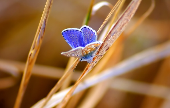 Picture grass, butterfly, insect