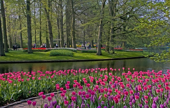 Picture grass, trees, flowers, pond, Park, tulips, Netherlands, Keukenhof, Lisse