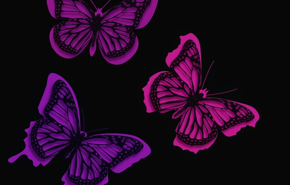 Picture line, background, pattern, butterfly, paint, moth