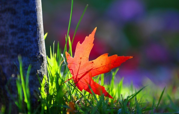 Picture greens, grass, macro, red, background, tree, Wallpaper, blur, leaf, wallpaper, bark, leaf, widescreen, background, tree, …