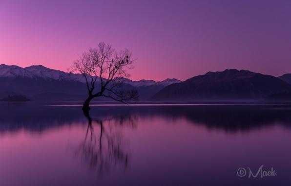 Picture the sky, sunset, mountains, lake, reflection, tree, the evening, New Zealand, the Peninsula, Otago, Wanaka
