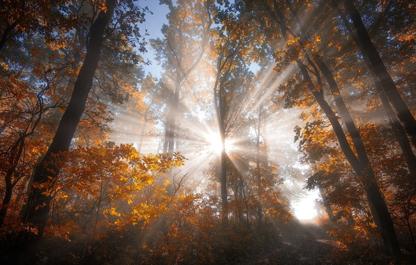 Picture autumn, forest, the sun, rays, light, nature