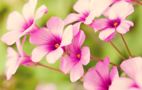 Picture flowers, pink, petals, pastel
