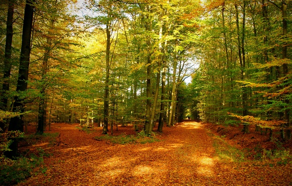 Picture autumn, forest, leaves, trees, nature, photo, trail
