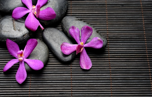Picture flowers, stones, black, flowers, Spa, stones, purple, bamboo, spa, zen