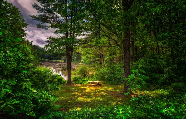 Picture greens, forest, summer, trees, pond, table, benches