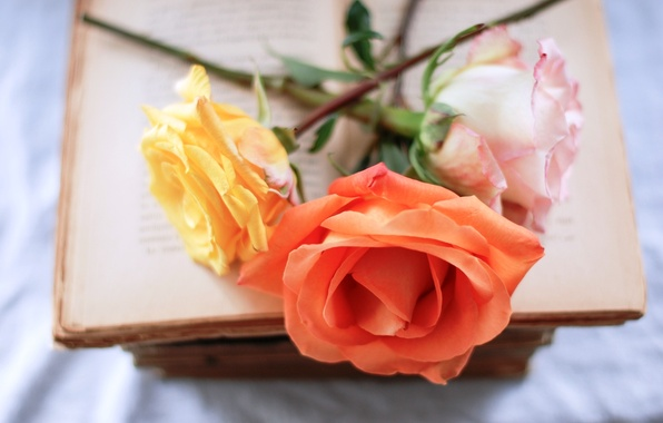 Picture flowers, pink, roses, orange, book, yellow