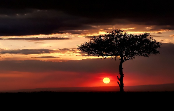 Picture the sky, clouds, sunset, tree, The sun