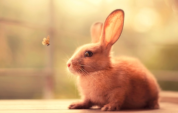 Picture butterfly, hare, rabbit