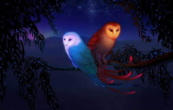 Picture water, mountains, birds, fantasy, tree, fire, elements, branch, stars, owls