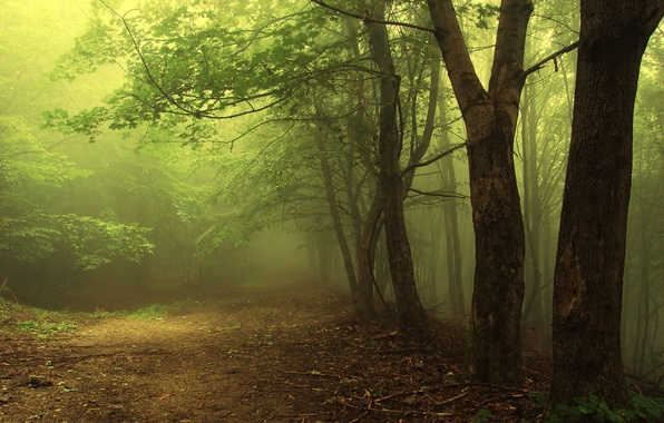 Picture greens, forest, leaves, trees, branches, nature, earth