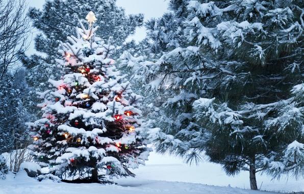 Picture snow, decoration, Park, tree, Winter
