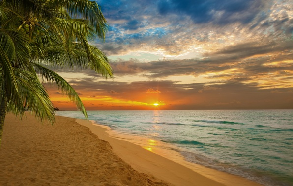Picture sand, sea, beach, sunset, palm trees, shore, beach, sea, sunset, sand, shore, paradise, tropical