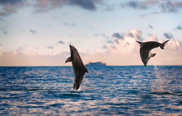Picture sea, nature, dolphins