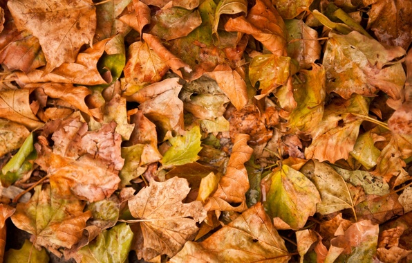 Picture autumn, leaves, yellow, fallen
