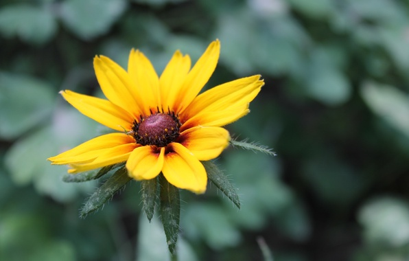 Picture greens, flower, macro, flowers, nature, yellow, background, plant, color, beauty, petals
