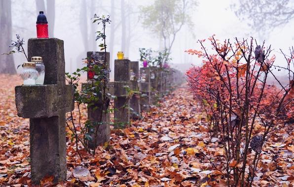 Picture autumn, leaves, trees, fog, crosses, graves, cemetery