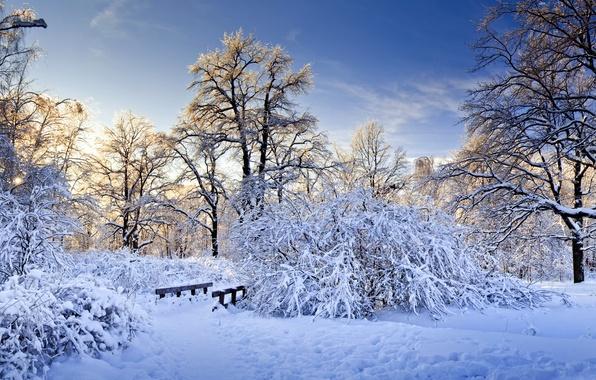 Picture winter, snow, trees, branches, bridge, nature, the bridge, the bushes