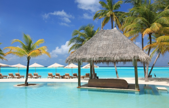Picture palm trees, the ocean, stay, pool, relax, exotic