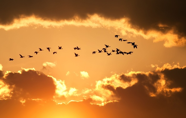 Picture the sky, clouds, flight, birds, yellow, nature, background, Wallpaper, wallpaper, silhouettes, widescreen, background, full screen, …