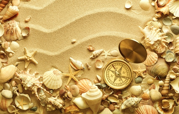 Picture sand, space, shell, shell, starfish