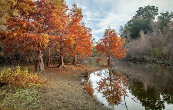 Picture autumn, pond, Park