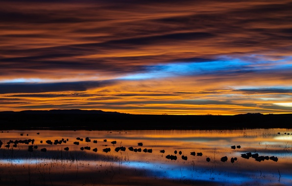 Picture the sky, clouds, birds, lake, reflection, dawn, morning, USA, New Mexico, reserve