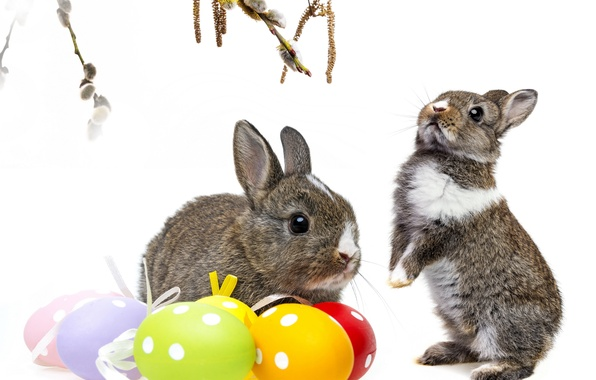 Picture branches, eggs, rabbit, Easter, Verba