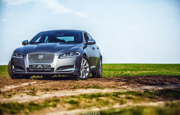 Picture field, machine, auto, grass, Jaguar, Jaguar, photographer, auto, photography, photographer, Thirteen