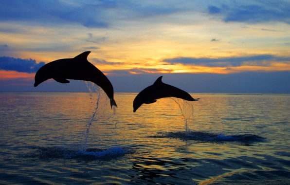Picture sea, the sky, water, sunset, squirt, nature, jump, the evening, horizon, silhouette, pair, dolphins, nature, …