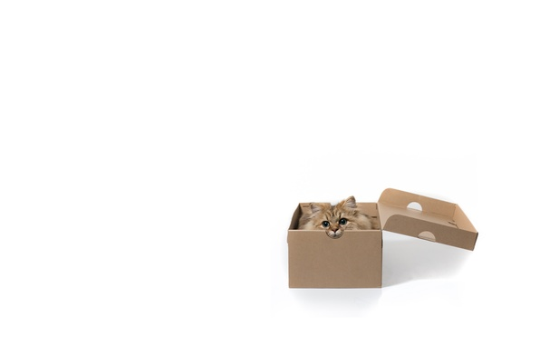 Picture cat, box, minimalism, white background, Daisy, © Benjamin Torode