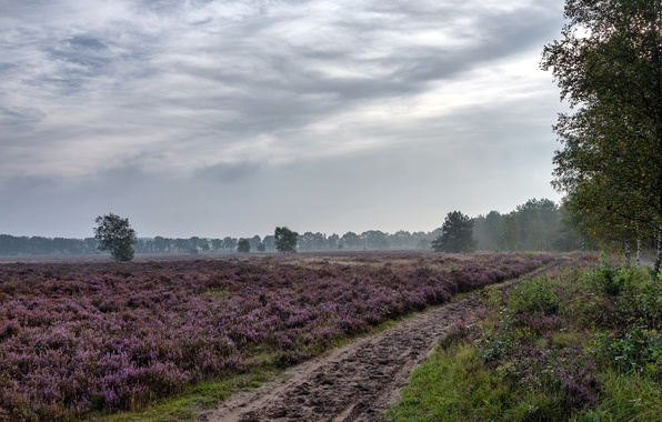 Picture road, field, summer, landscape, flowers, nature