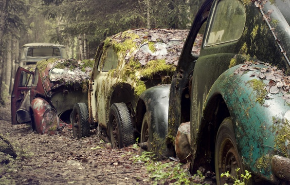 Picture road, forest, machine, moss, scrap