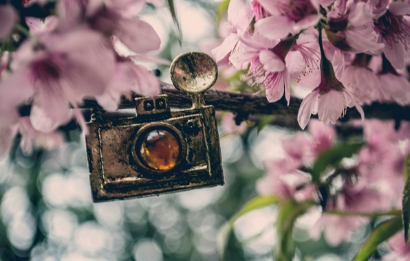Picture flowers, background, widescreen, Wallpaper, the camera, pendant, wallpaper, pink, flowers, different, widescreen, background, full screen, …