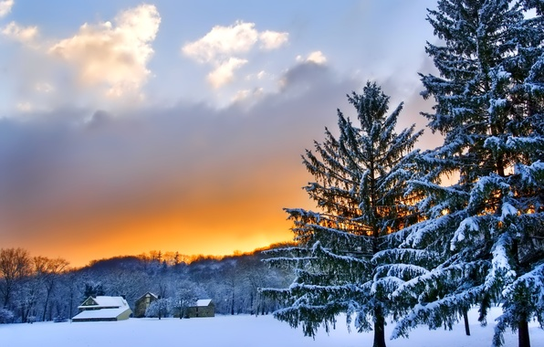 Picture winter, the sky, clouds, snow, trees, landscape, sunset, nature