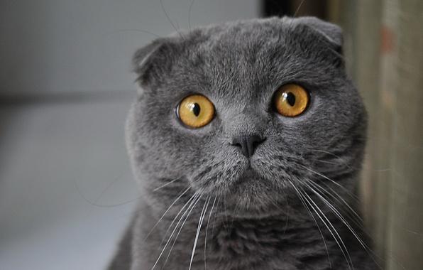 Picture look, grey, Koshak
